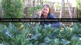 Growing Broccoli - Vegetable Gardening