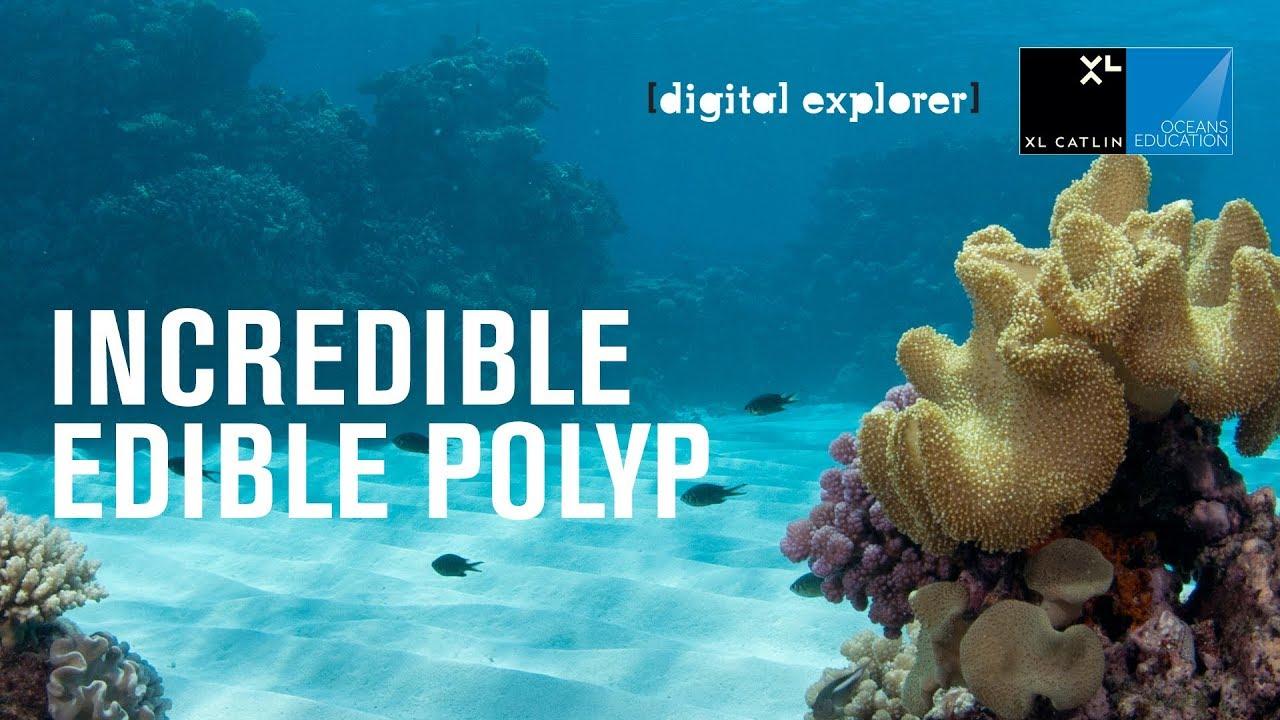 Incredible Edible Polyp Activity - YouTube