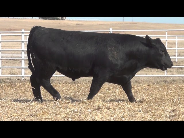 Express Ranches Lot 379