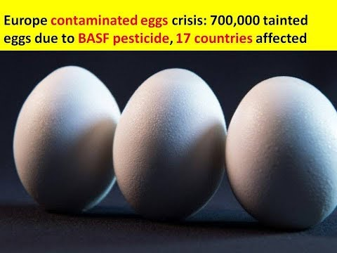 Europe contaminated eggs crisis: 700,000 tainted eggs due to BASF pesticide, 17 countries affected