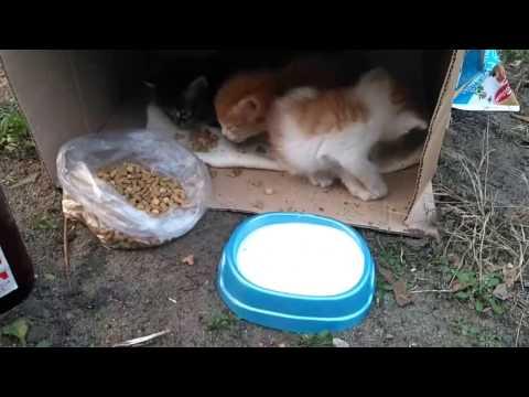 Кошкодети. Нашли котят. Купили им еду (Воронеж)