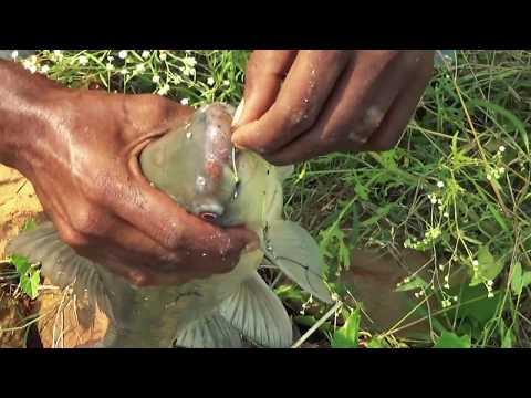 Best Live Fishing Videos By Fishing Rod & Fish Hooks