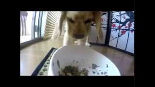 How To Teach A Dog To Eat  Slowly - Munchie Falcor - Cute