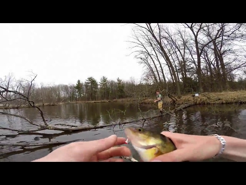Panfish at the PIPES (Central Wisconsin)