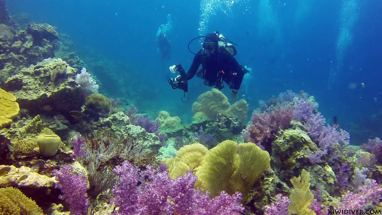 diving coral reef - photo #5