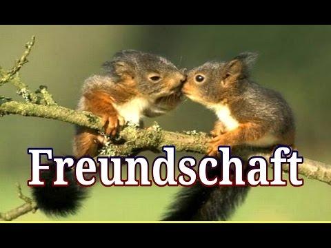 Gute Spruche Freundschaft.11 Schone Spruche Uber Freundschaft Julebuergerfee