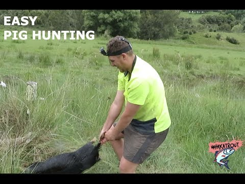 Nz Pig Hunting (EASY HUNTING)/ A Day In The Life Of WhakaTrout