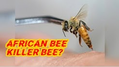 AFRICAN BEES..KILLER BEES?