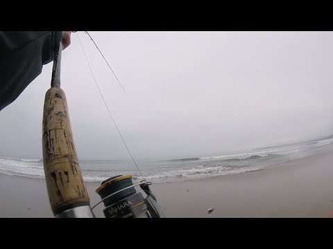 Surf Fishing California - You NEVER Know What You Will Catch!