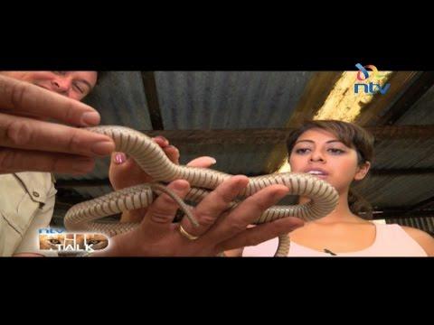 NTV Wild Talk S5 E5; Splendid Snakes