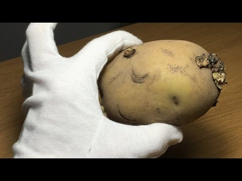 Story of Potato