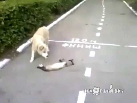 Smart Cat VS. Stupid dog!!!