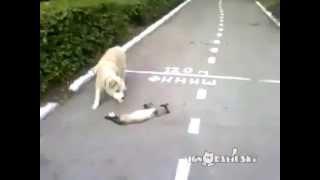 Smart Cat VS. Stupid dog!!!
