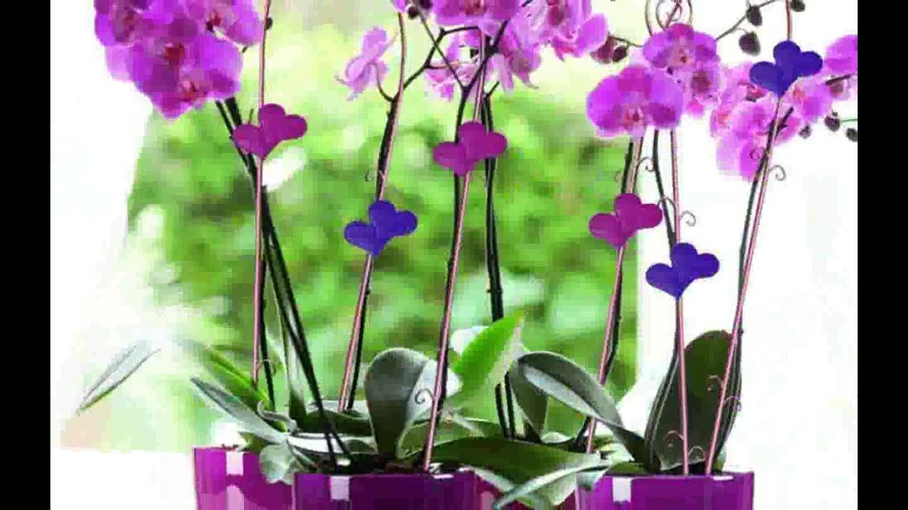 Deko mit orchideen design youtube - Deko orchideen ...