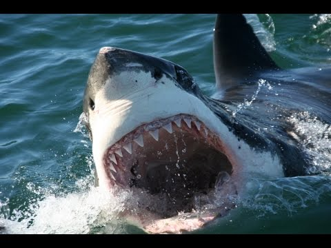 top 10 most dangerous animals in australia youtube