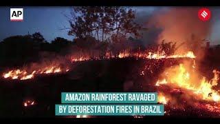 #AmazonRainforest Amazon rainforest ravaged by deforestation fires in Brazil