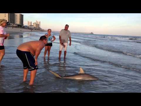 Big Shark, Stingray, Cherry Grove Beach Surf Fishing From Beach