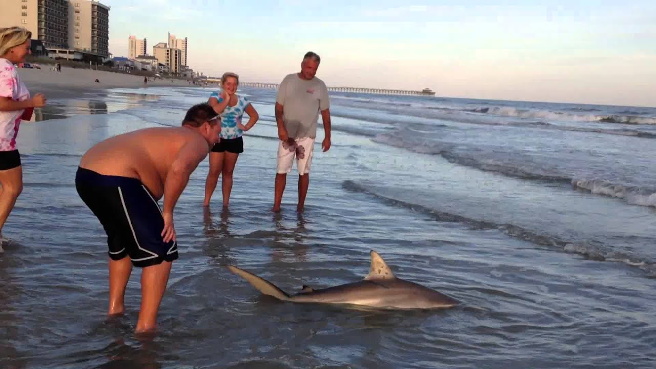 Surf fishing myrtle beach the best beaches in the world for Myrtle beach surf fishing report