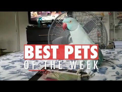 Best Pets of the Week Video Compilation | Week 2 March 2018