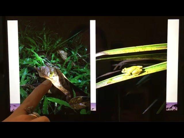Detroit Zoo | Educational Lesson: Spotting Amphibians in the Amazon Rainforest