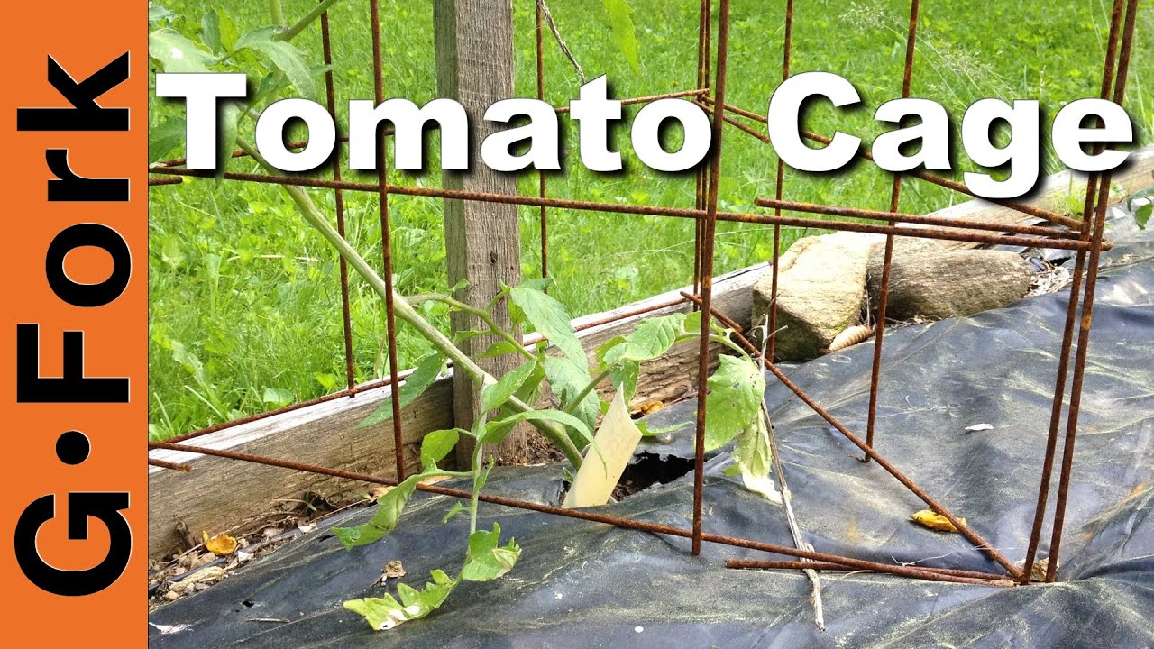 Best Tomato Cages How To Gardenfork
