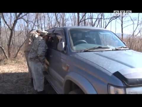 видео: Браконьеры в Хасанском районе