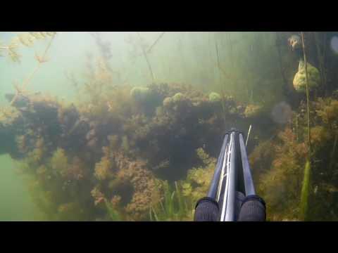 Первая подводная охота,новичок на подводной охоте, охота в траве.Арбалет CRESSI OUX, Волгоград.