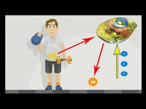 Почему живот не уходит от тренировок. Правильный механизм жиросжигания.