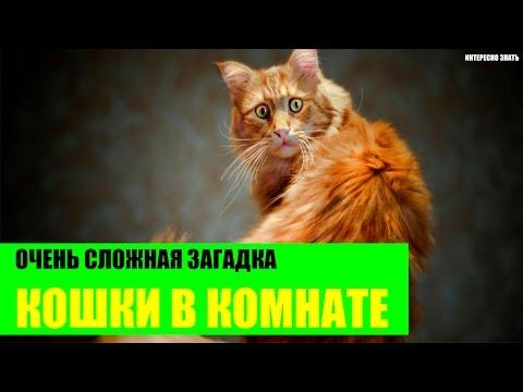 Загадка про кошек в четырехугольной комнате. Сколько кошек в комнате?