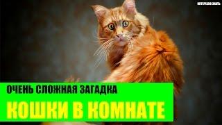 Очень сложная загадка про кошек в комнате