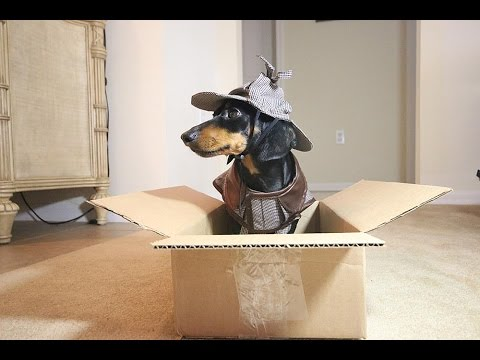 Who Stole the Barkbox Contents?! Sherlock Bones is On The Case!