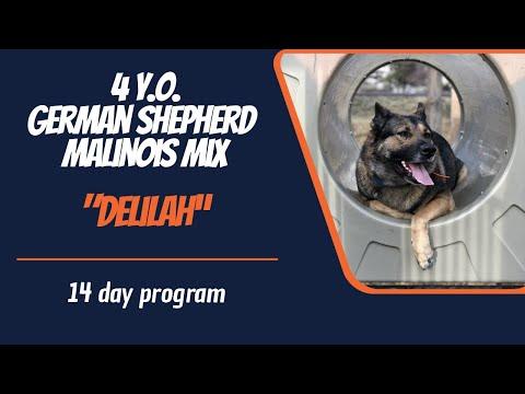 GERMAN SHEPHERD BELGIAN MALINOIS MIX / DOG TRAINING