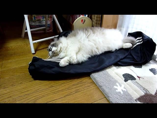 仕事行かせない~猫HD      Don't go to work~Cat