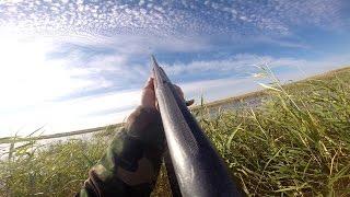 Охота на уток 2016 год видео