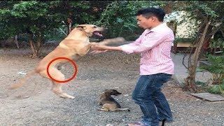 Funny dogs eat foods,Funny animals,Smart dog happy with friend,Dogs run happy with friend,