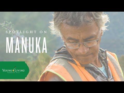 discover-manuka- -young-living-essential-oils