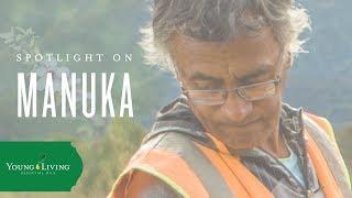 Discover Manuka | Young Living Essential Oils