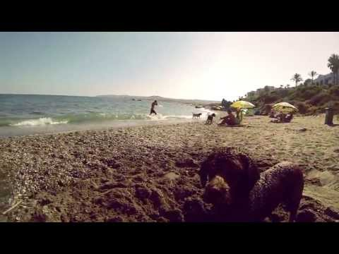 PLAYA EXCLUSIVA PARA PERROS from YouTube · Duration:  10 minutes 26 seconds