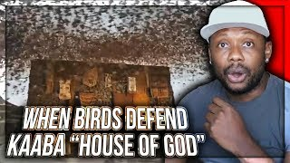 CHRISTIAN REACTS TO When Birds Defend KAABA (House of GOD) || Story of Ababil Birds and The Elephant