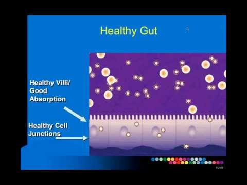 The Gut As A Portal To Your Health! Presented By Patrick Hanaway, MD