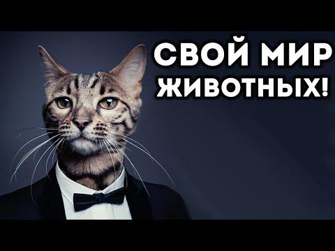 СВОЙ МИР ЖИВОТНЫХ! - Tyto Ecology