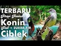 Terbaru Terapi Konin Full Tembakan Feat Ciblek Suara Air Hd Kicau Mania(.mp3 .mp4) Mp3 - Mp4 Download
