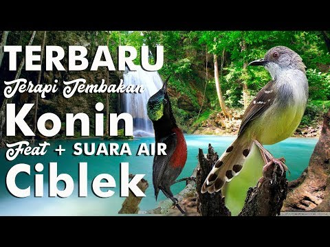 Download Lagu Terbaru Terapi Konin Full Tembakan Feat Ciblek + Suara Air HD