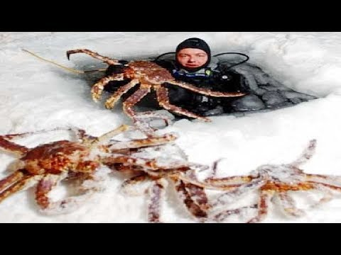 Amazing Fishing Alaska King Crab On Sea Ice - Fastest Fish Catching On The Sea