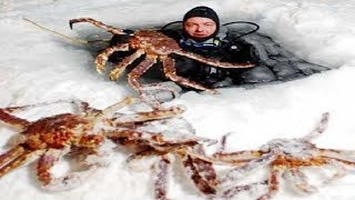 Baixar Amazing Fishing Alaska King Crab on Sea Ice - Fastest Fish Catching on The Sea
