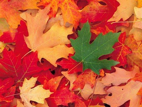 Осень золотая картинки красивые фото обои на рабочий