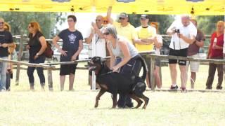 Achille Domus M.a.s.   Ztp Rottweiler Club Italiano Capena ( Roma) 06 2014 - Video Niferre