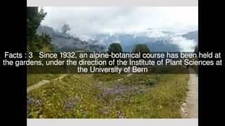 Schynige Platte Alpine Garden Top  #6 Facts