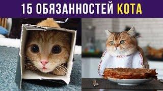 Приколы с котами. 15 обязанностей кота   Мемозг #26
