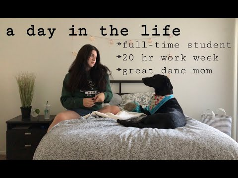 A Day in the Life // StudentDog Owner